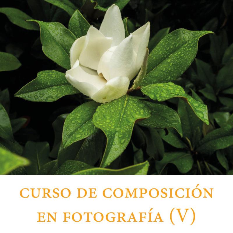 119. Curso de composición | Parte 5